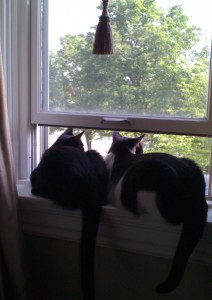 Frankie & Oreo in Window