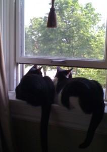 Frankie & Oreo in Window
