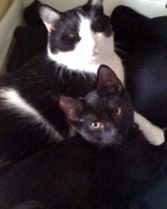 Oreo & Frankie