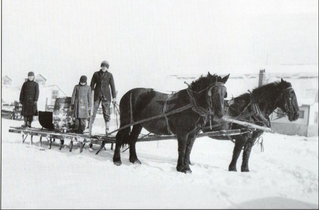 Horses and Sleigh on Schupp Farm