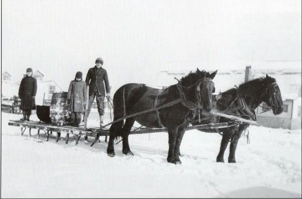 Horses and Sleigh on Schupp Farm